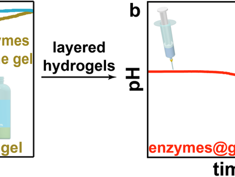 Autonomous Transient pH Flips Shaped by Layered Compartmentalization of Antagonistic Enzymatic React