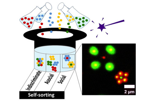 Social Self-Sorting of Colloidal Families in Co-Assembling Microgel Systems