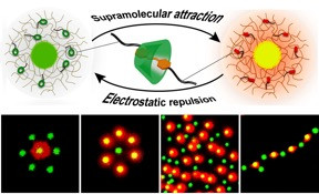 Switchable Supracolloidal Coassembly of Microgels Mediated by Host/Guest Interactions