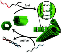Switchable Supracolloidal 3D DNA Origami Nanotubes Mediated through Fuel/Antifuel Reactions