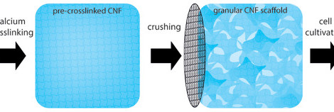 Granular Cellulose Nanofibril Hydrogel Scaffolds for 3D Cell Cultivation