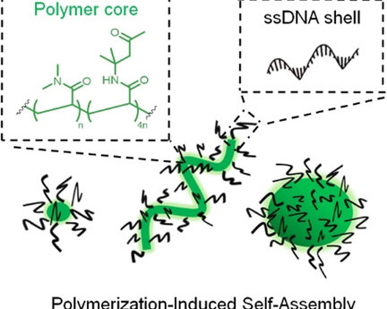 DNA–Polymer Nanostructures by RAFT Polymerization and Polymerization‐Induced Self‐Assembly