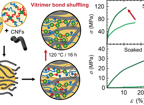 Vitrimer Chemistry Meets Cellulose Nanofibrils: Bioinspired Nanopapers with High Water Resistance an