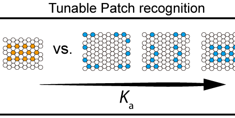 Multivalency Pattern Recognition to Sort Colloidal Assemblies