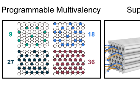 Supracolloidal Self‐Assembly of Divalent Janus 3D DNA Origami via Programmable Multivalent Host/Gues
