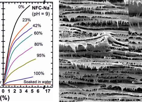 Humidity and Multiscale Structure Govern Mechanical Properties and Deformation Modes in Films of Nat
