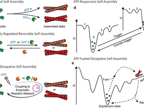 ATP‐Responsive and ATP‐Fueled Self‐Assembling Systems and Materials