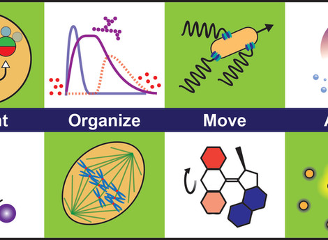 Materials learning from life: concepts for active, adaptive and autonomous molecular systems