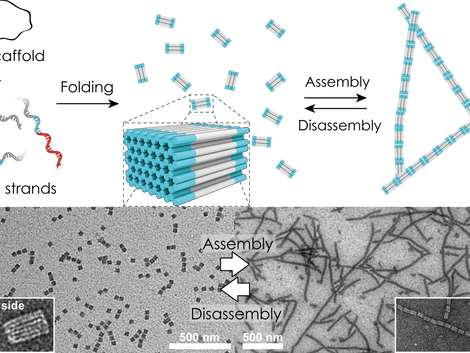 3D DNA Origami Cuboids as Monodisperse Patchy Nanoparticles for Switchable Hierarchical Self-Assembl