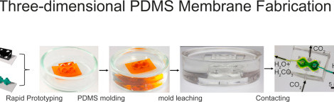 Print your Membrane: Rapid Prototyping of Complex 3D-PDMS Membranes via a Sacrificial Resist