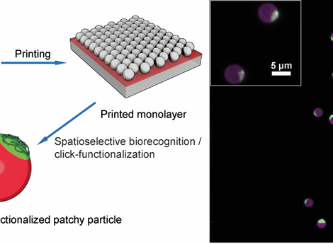 Preparation of Highly Monodisperse Monopatch Particles with Orthogonal Click-type Functionalization