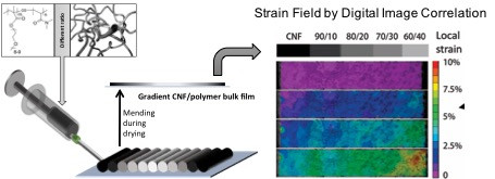 Bioinspired Mechanical Gradients in Cellulose Nanofibril/Polymer Nanopapers