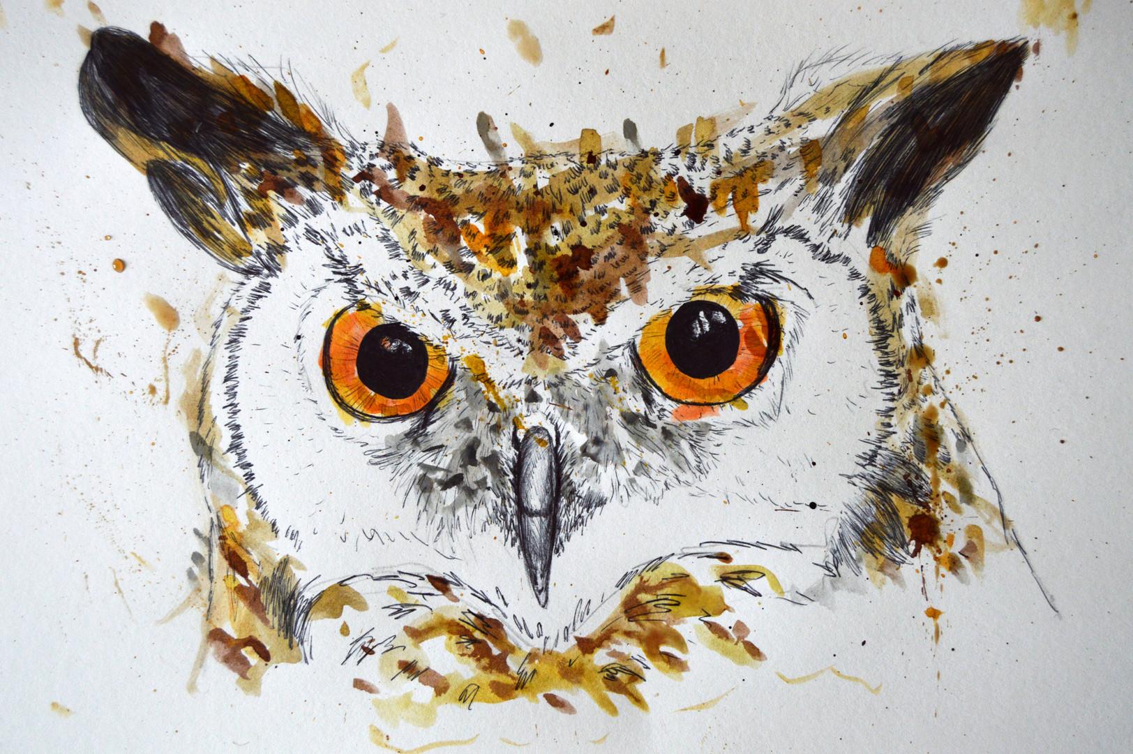 Splash Owl