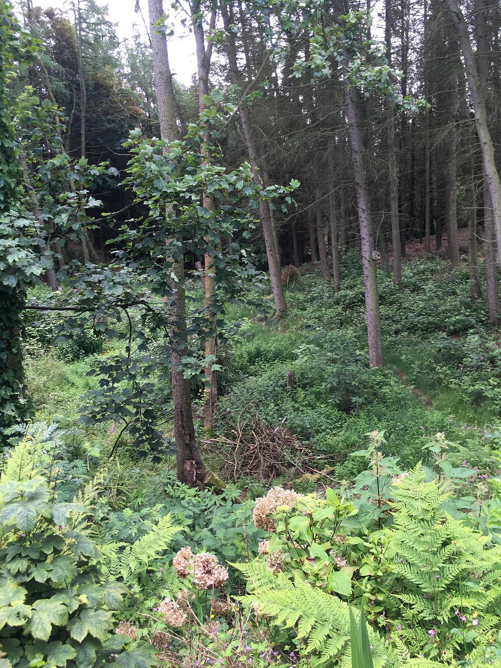 Woodland Plot - Fresh Start Living