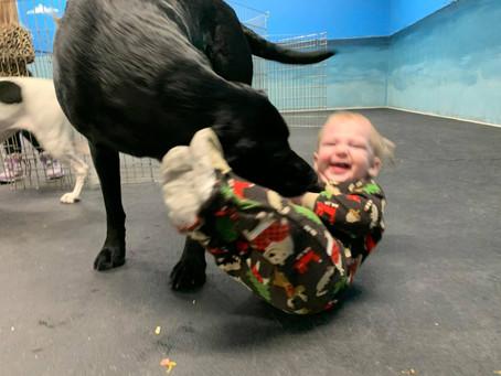 Canine Corner Reboot; Behaving Around Baby