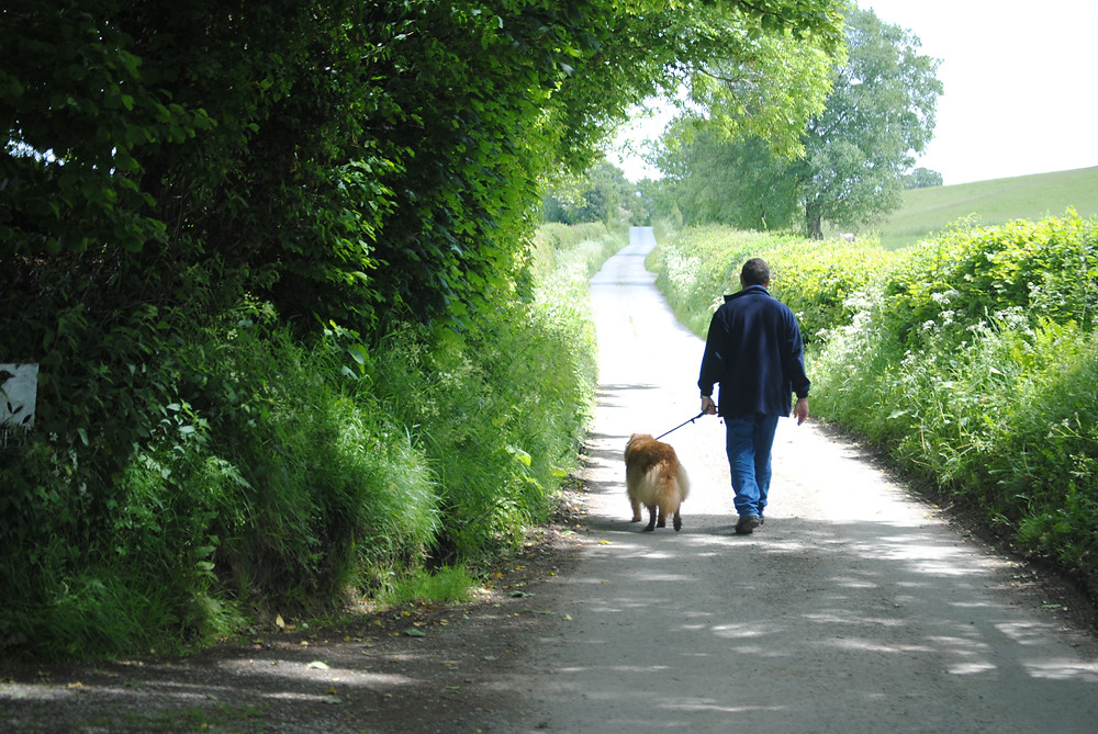 Once a busy drover's route. Now a quiet country lane.