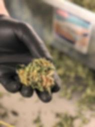hand an bud