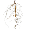 root png