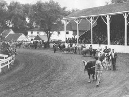 Cattle Parade 1950