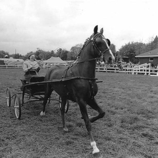 Horse Shows 1950s