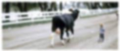 boy_with_cow.jpg