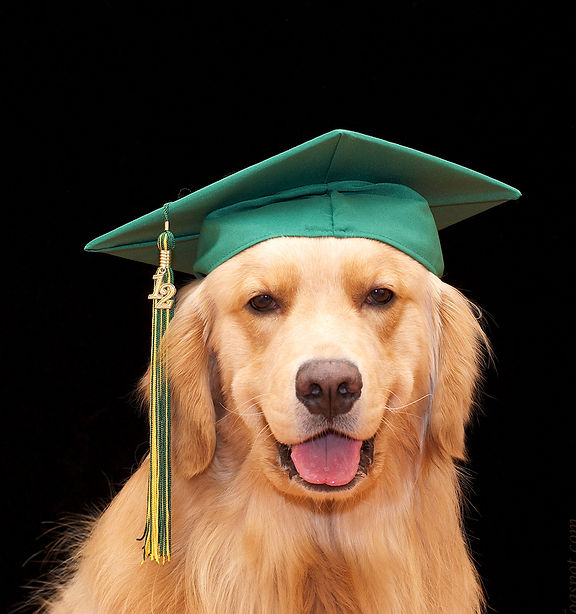 dog graduating from obedience class