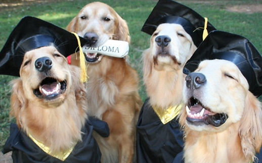dogs successfully complete basic obedience training