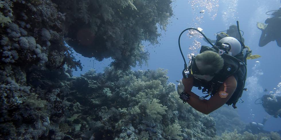MOLA Clubreise Tauchsafari M/Y Ocean Window Rotes Meer