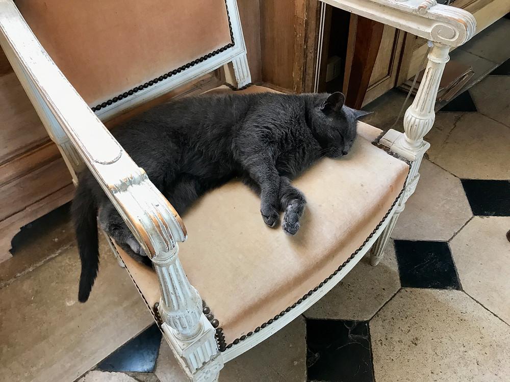 Le fauteuil du grand salon est un lieu idéal pour la sieste de Gaby