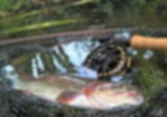 Truite péchée à la mouche au Moulin de Boizard