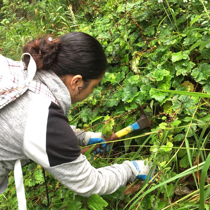 Restoration Work on the Trails
