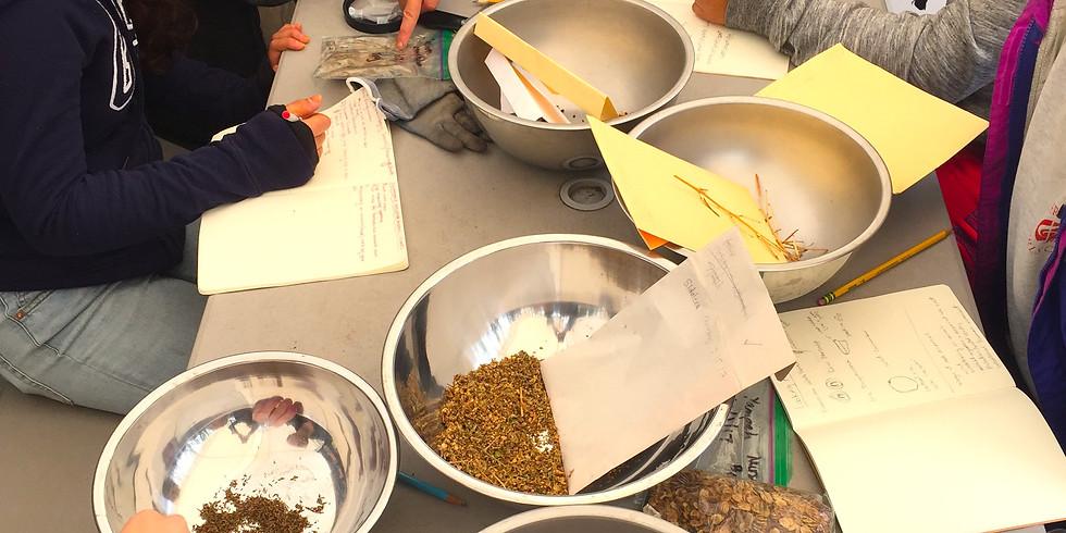 Volunteer! Nursery Stewardship