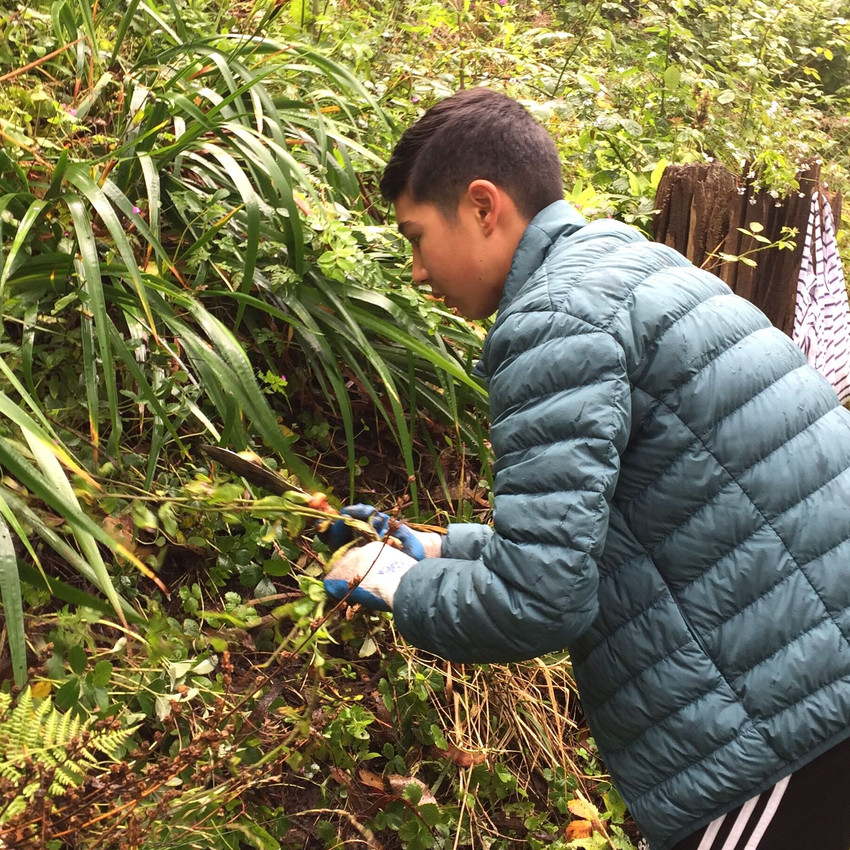 Helping Our Native Plants