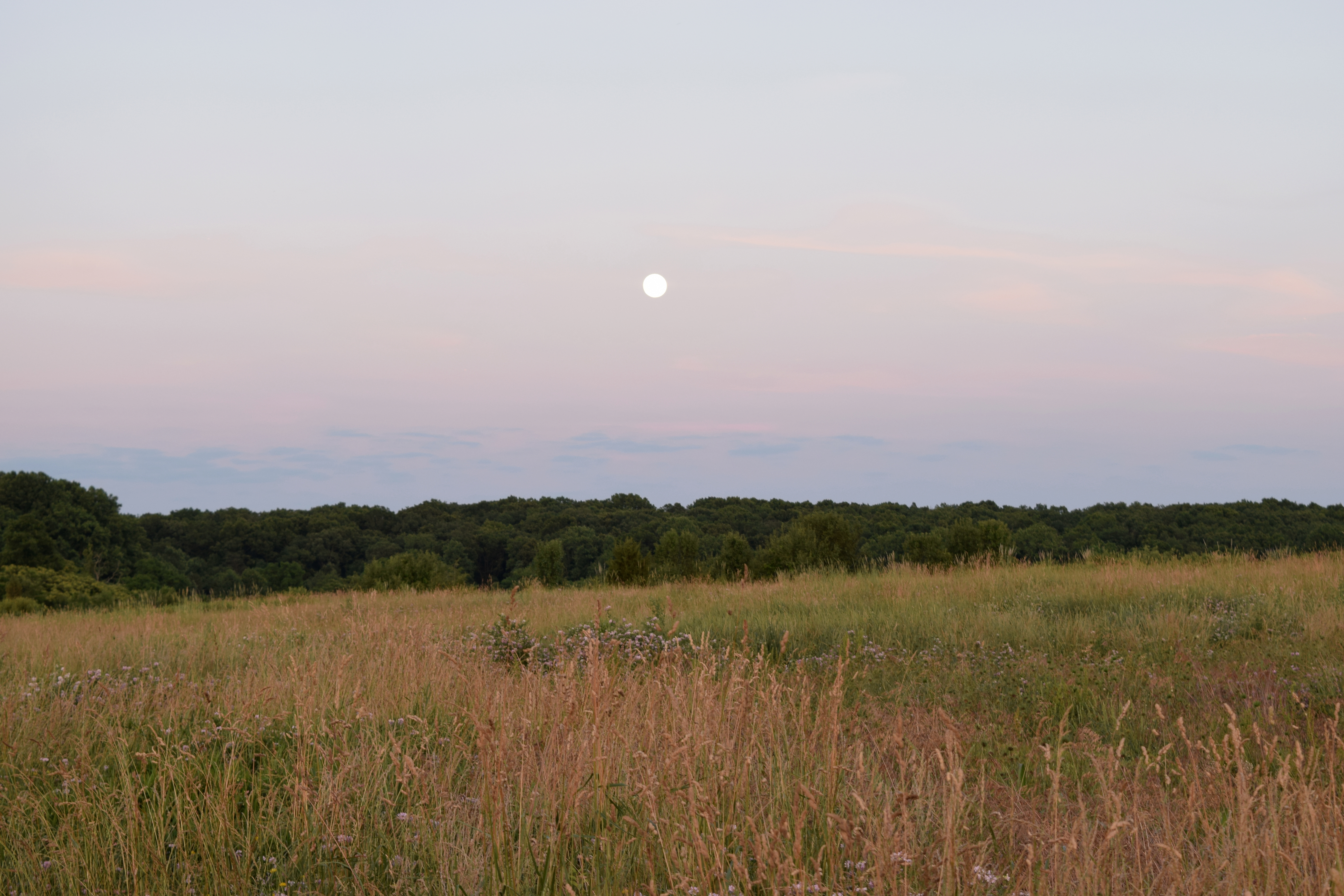 Field and moon photograph