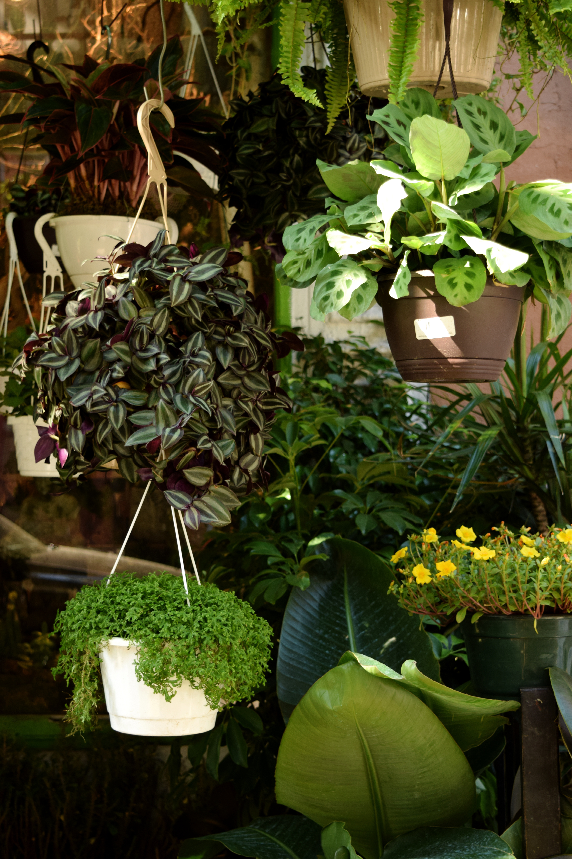 New York Plants