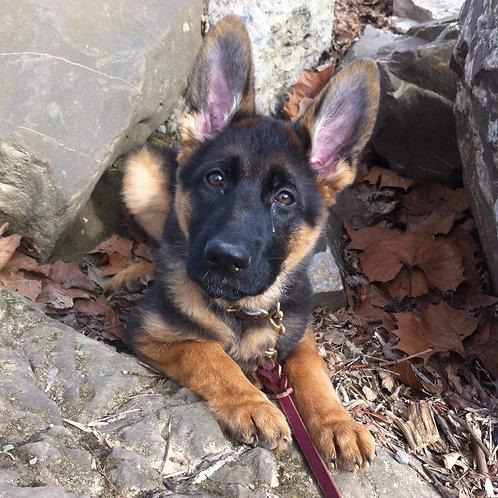 S.T.A.R. Puppy Class 3/12/20-4/16/20