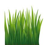 grass-4-icon.jpg