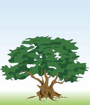 about-tree.jpg