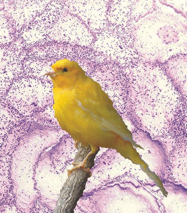 Canary_5_web.jpg