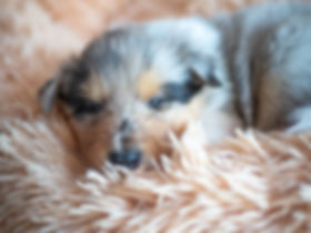 Hundewelpen-15.jpg