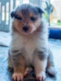 Hundewelpen-11.jpg