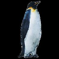 Aquarelle Penguin 3