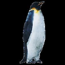Aquarell Penguin 3