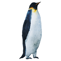 Watercolor Penguin 3