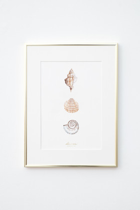 Lamina-Alamar-editions-ilustracion-conch