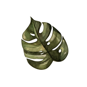 monstera.png