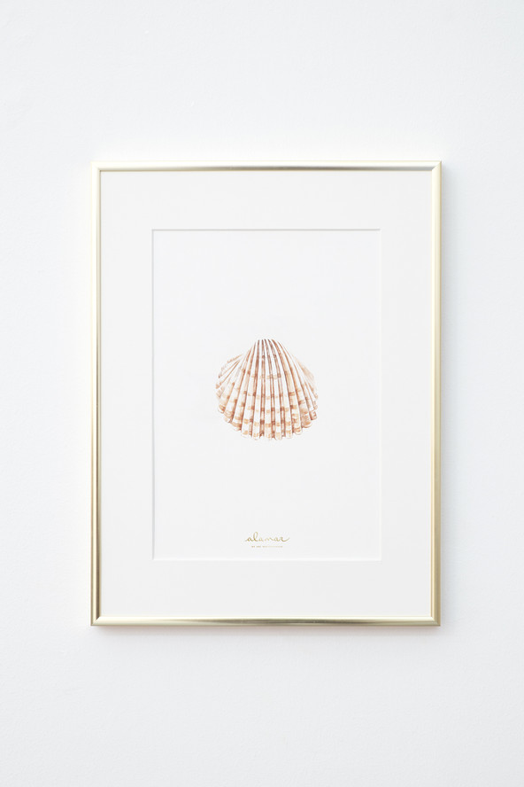 Lamina-Alamar-editions-concha-ilustracio