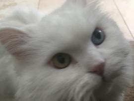 Hello Jasper 💜