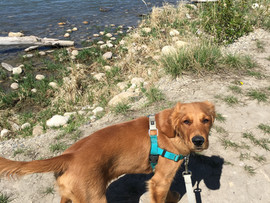 Dog Walking - one spot left!