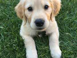 Welcome to adorable Remy!